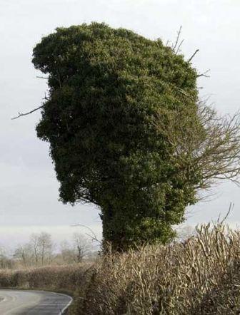 4445420 treeface2 - vtipný obrázok - Kalerab.sk