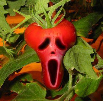 45511278962 scream ina - vtipný obrázok - Kalerab.sk