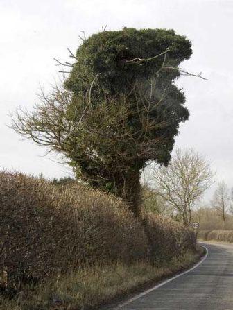 47584441 treeface - vtipný obrázok - Kalerab.sk