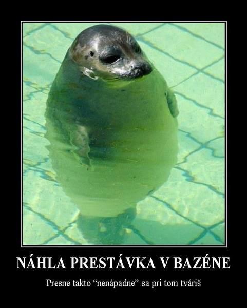 bazen klrb - vtipný obrázok - Kalerab.sk