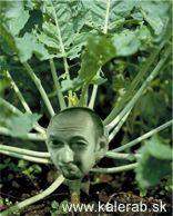 bid4yl5 - vtipný obrázok - Kalerab.sk