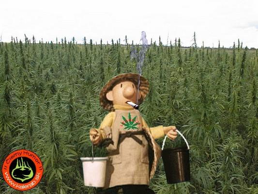 marihuana - vtipný obrázok - Kalerab.sk