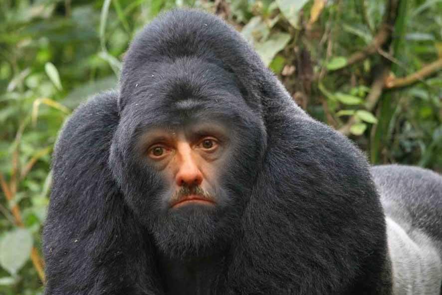 najzakernejsia opica sveta - vtipný obrázok - Kalerab.sk