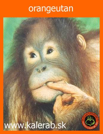 orange - vtipný obrázok - Kalerab.sk