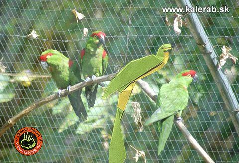 parrots - vtipný obrázok - Kalerab.sk