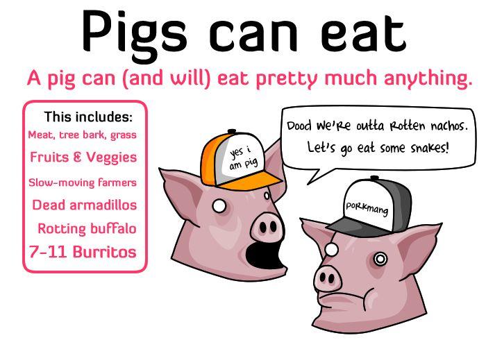 pig2 - vtipný obrázok - Kalerab.sk