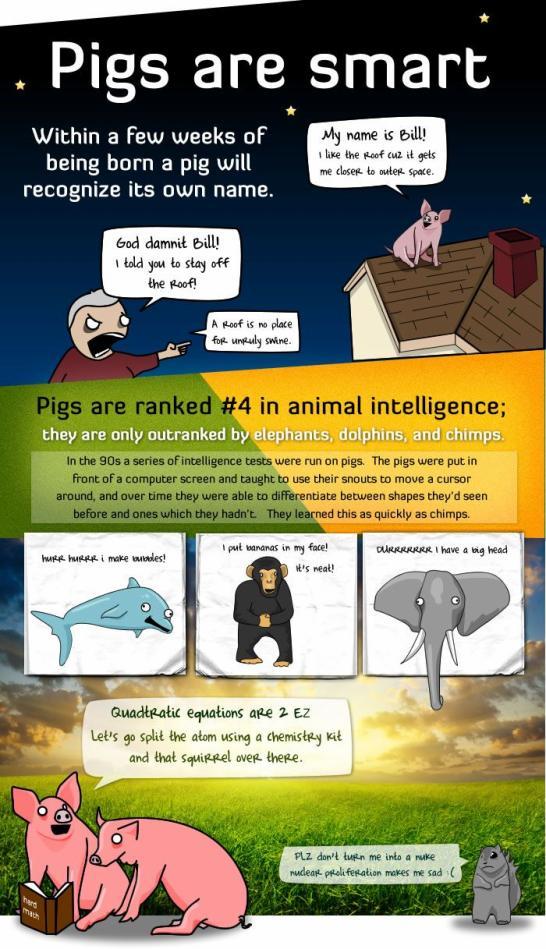 pig - vtipný obrázok - Kalerab.sk