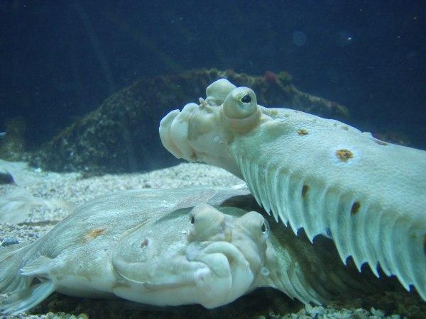 ryba - vtipný obrázok - Kalerab.sk